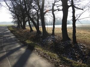 Blick in die Röglitzer Aue Richtung Elsterdamm
